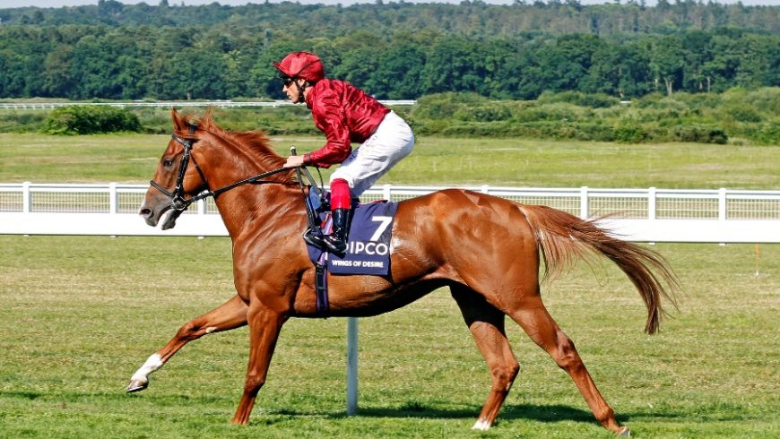 Wings Of Desire may be aimed at Durban July