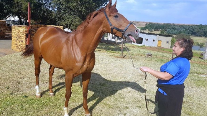 Wings Of Desire out of 2018 Durban July