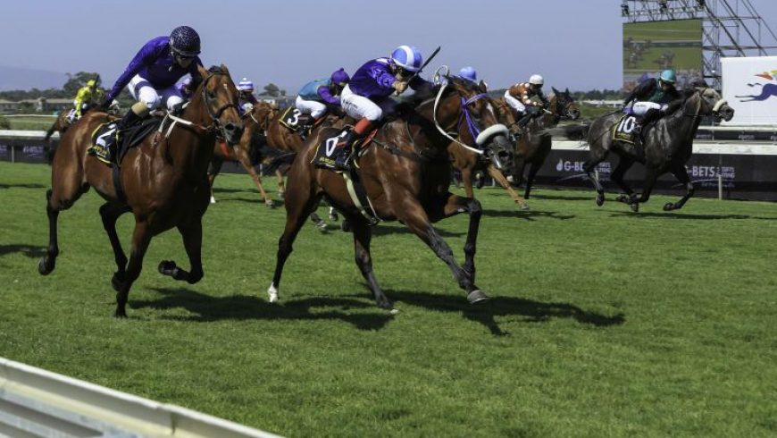 Herodotus gets third in Gr1 Cape Derby