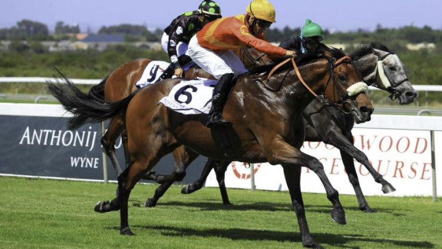 Herodotus second in Gr2 Peninsula
