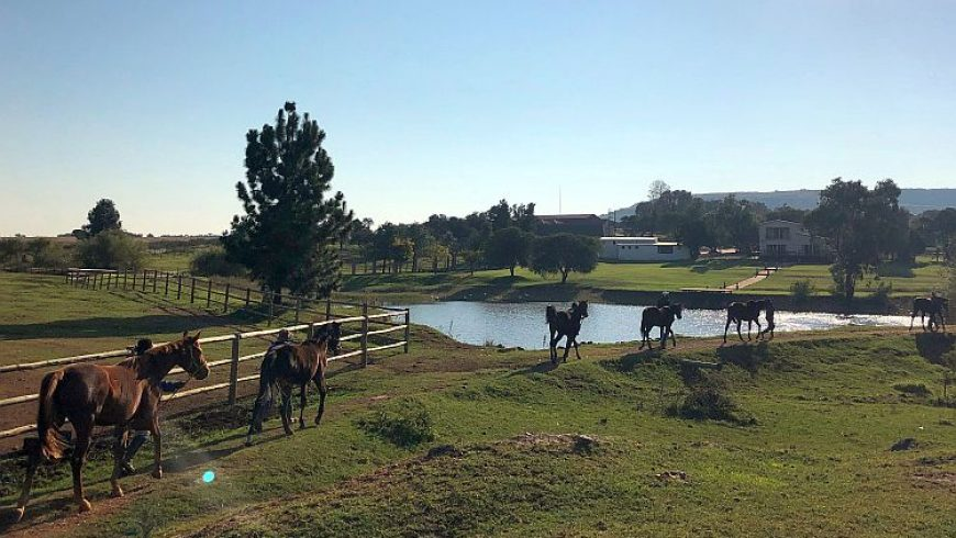 HPF is a wonderful facility for boarding mares!