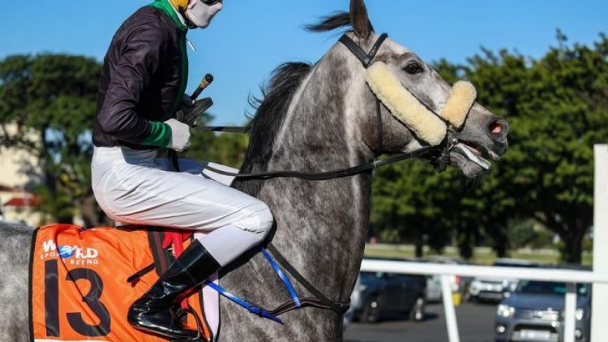 Herodotus in Cup Trial today
