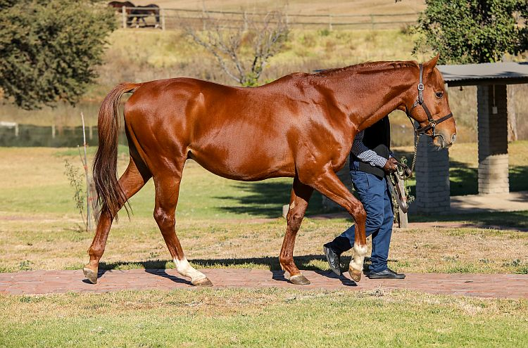 'Wings' can emulate his superb track record at stud