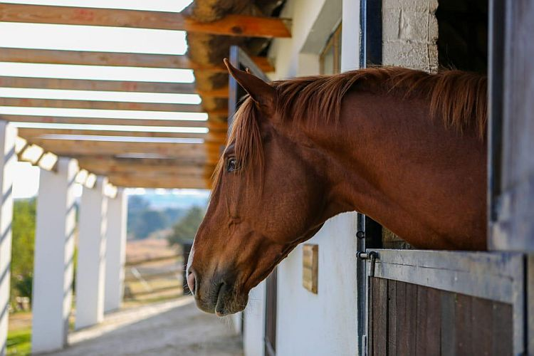 Drakenstein mare to visit Wings Of Desire