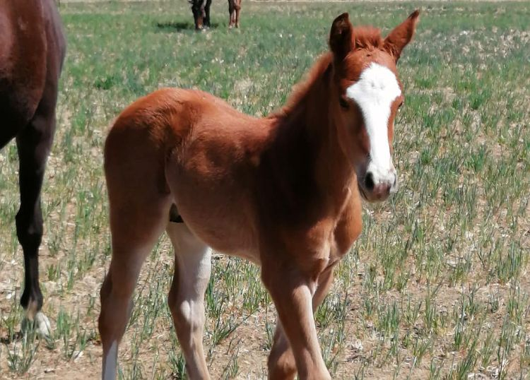 A nice colt by 'Wings' from Dubai Moonlight
