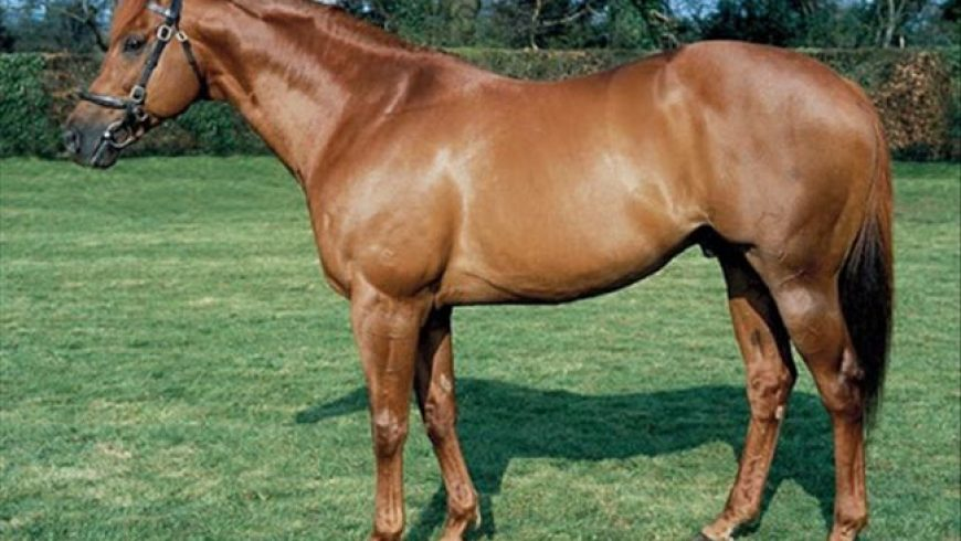 Champion sire Pivotal retired from stud duties