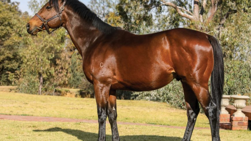 Moofeed (AUS) waiting to serve your mares!